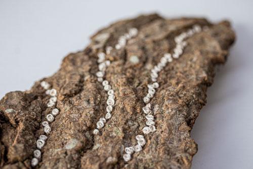 stitched bark by Birgit Moffatt