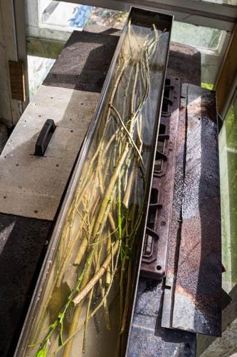 boiling mahoe sticks by Birgit Moffatt
