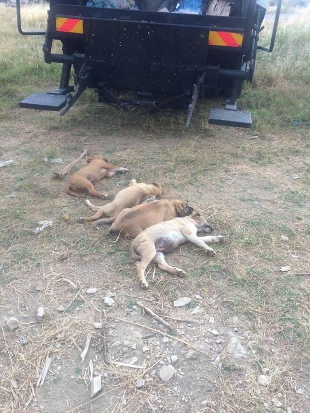 Alanya Konaklı Yavru Köpekleri zehirlediler