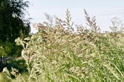 Bild: Sommerwind - Wiese bei Greifenhagen. NIKON D300S - ISO200, f / 32, 1:10 s. DxO Optics Pro 7.0 Expert.