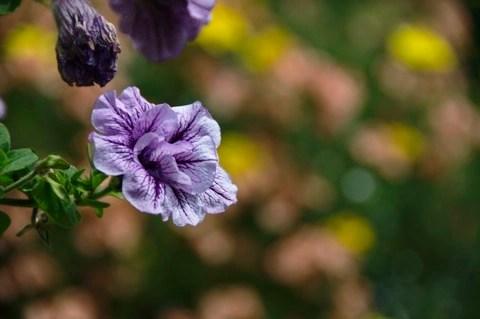Bild: Blume, aufgenommen mit NIKON D90 und Objektiv AF-S DX NIKKOR 18-200 mm 1:3,5-5,6G ED VR Ⅱ.