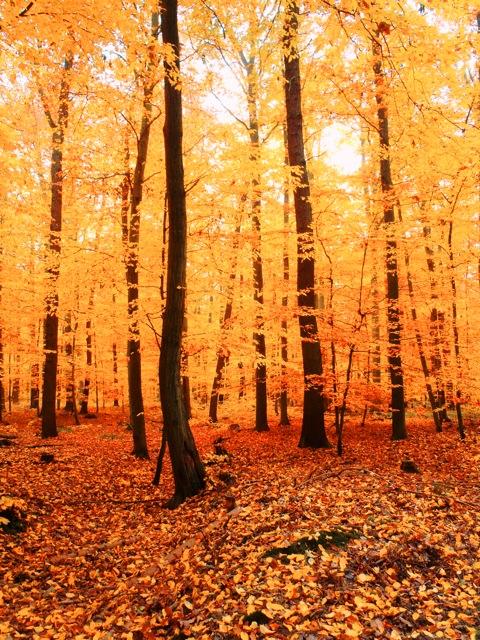 Bild: Herbstlicher Wald bei Bräunrode, Mansfeld-Südharz.