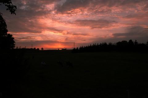 Bild: Sommerlicher Sonnenuntergang über dem Pfaffenholz bei Greifenhagen. NIKON D700 und AF-S NIKKOR 24-120 mm 1:4G ED VR.