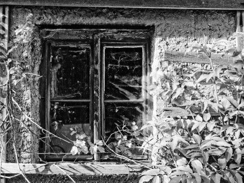 Bild: Fenster - Schwarz-Weiss-Film AGFA APX (TM) 25. OLYMPUS OM-D E-M5 mit M.ZUIKO DIGITAL ED 12‑40mm 1:2.8. ISO 200 ¦ f/2,8 ¦ 15 mm ¦ 1/250 s ¦ kein Blitz. Klicken Sie auf das Bild um es zu vergrößern.