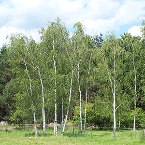 Campingwiese