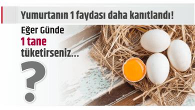 Photo of Yumurtanın 1 faydası daha kanıtlandı! Eğer Günde 1 tane tüketirseniz…
