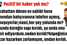 Photo of POZİTİF BİR HABER YOK MU?