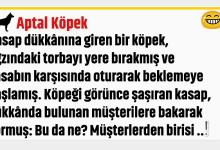 Photo of Aptal Köpek