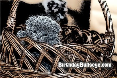 Birthday Basket with Kitten