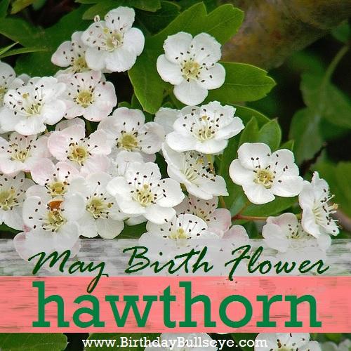 May Birth Flower - Hawthorn