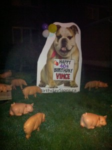 Bulldog Lawn Greeting with pig lawn ornaments