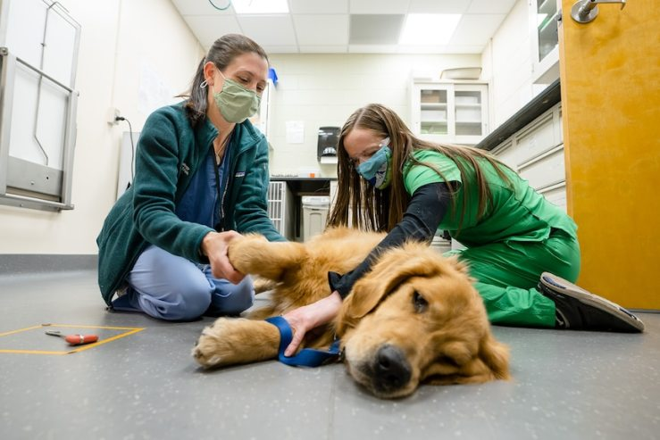 Two women in masks treat a dog lying on the floor of a veterinary room