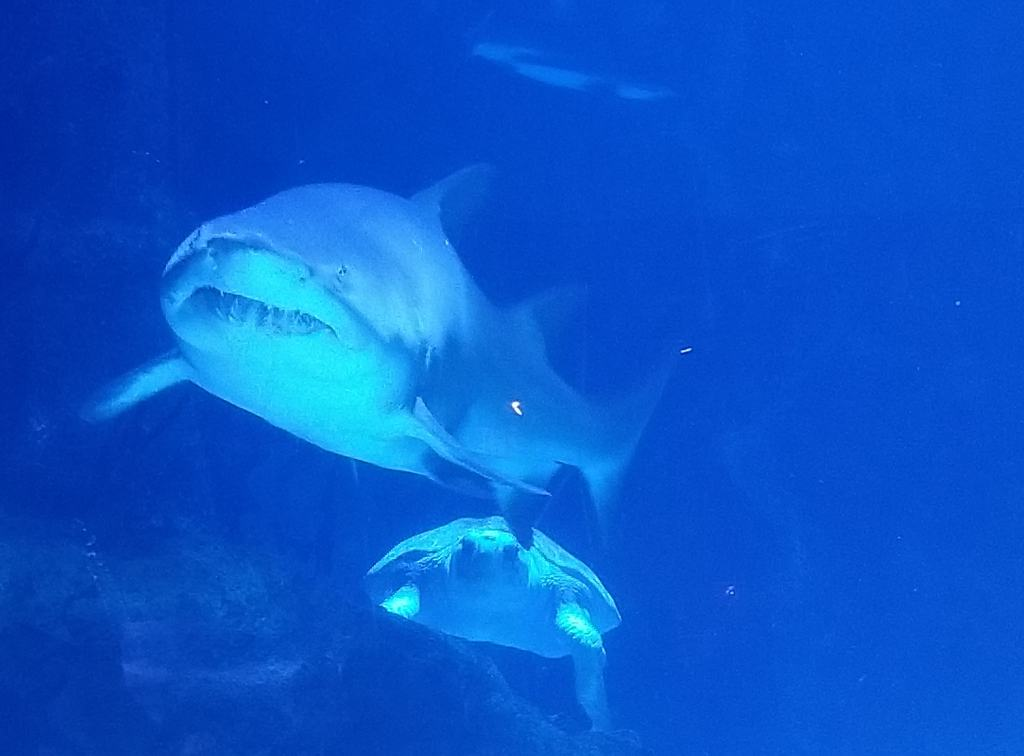 shark newport aquarium
