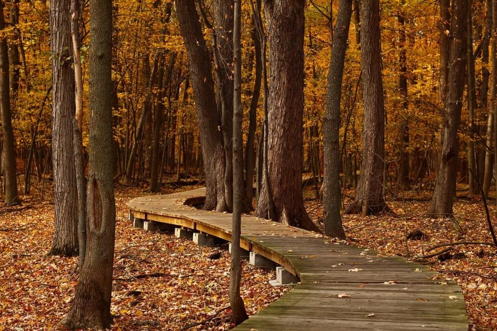 fall hike through leafy forest