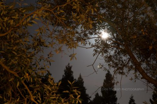 Before going to bed, I had fun with my camera and the moonlight. this was taken shortly after midnight.