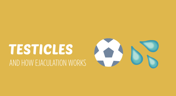 testicles and how ejaculation works
