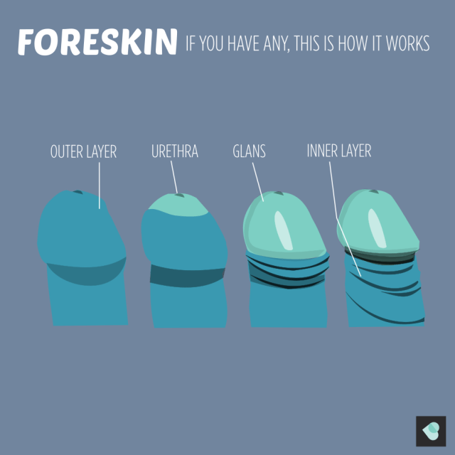 how foreskin works