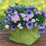 Trixi_blueberryparfait