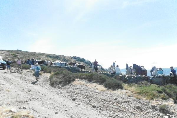 caballos_en_el_puerto