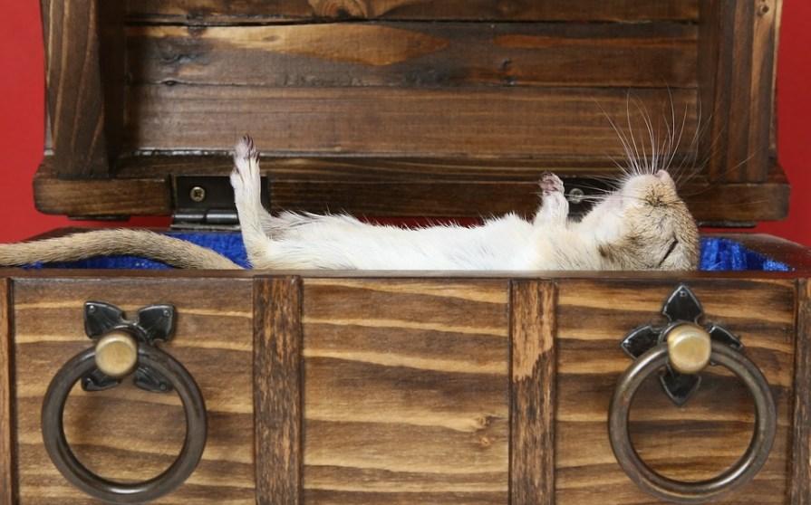 Dead rat in a box