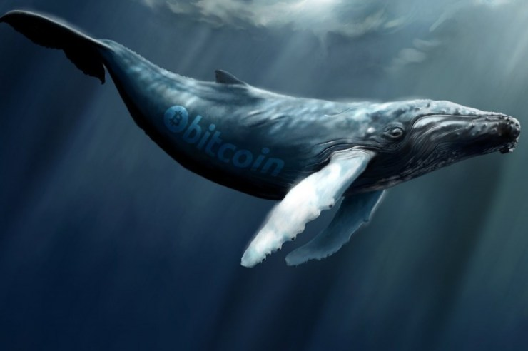 Bitcoin Whales and How They Make Market Waves