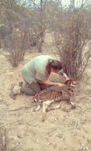 With Bitcoin Cash, A Namibian Conservationist Hopes To Save Endangered African Wild Dog