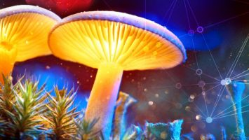 Of Moonshots and Mushrooms: Let's Get Beyond Technocratic Thinking 2