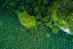 Blockchain May Resolve Palm Oil Problems 8