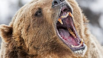 Markets Update: Bears Continue to Drag Cryptocurrency Prices Down 2