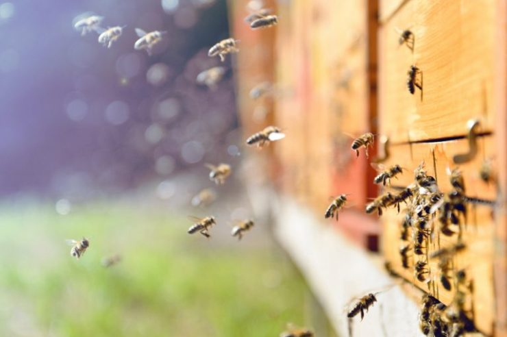 Hive Criticizes Norwegian Government Amid Concession Cuts to Miners 1