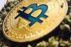 Bitcoin instead of cannabis 14
