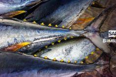 Bumble Bee Foods Uses Blockchain To Track Yellowfin Tuna 6