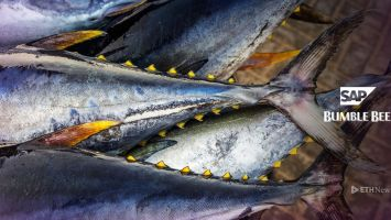Bumble Bee Foods Uses Blockchain To Track Yellowfin Tuna 2