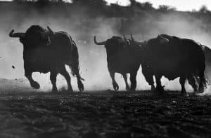 XRP Joins Crypto Bull Run as Massive Longs Push Price above $0.32 4