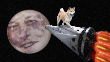 dogecoin price captures 24 hour double digit gains following social media hype