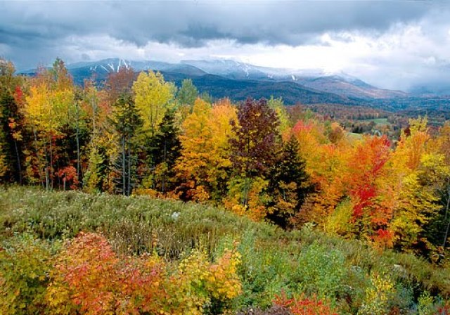 For the purposes of this plan, the aspen/ deciduous habitat type is defined as the four Temperate Deciduous Forests Ejercicio De Ingles Lectura Nivel Intermedio Bitgab