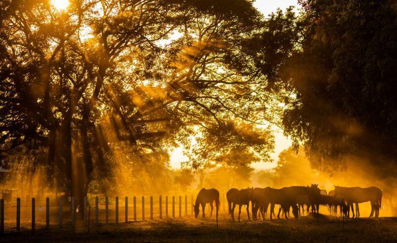 Foto: Shutterstock abraham lincoln i obad