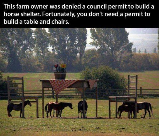 Table and chairs for horses