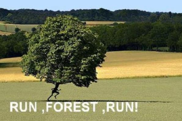 Run forest run4