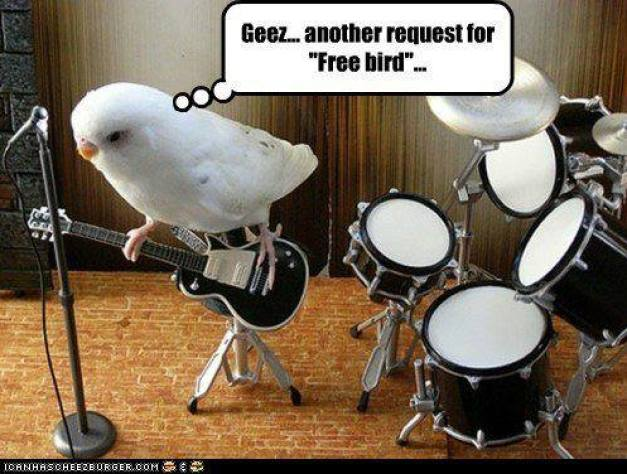 Another request for freebird