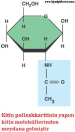 bitkisel kitin yapısı