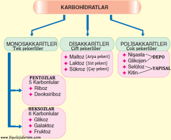 karbohidrat çeşitleri