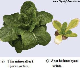 bitki tuz miktarı