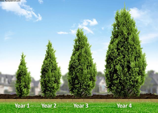 bitki büyüme ve hareket