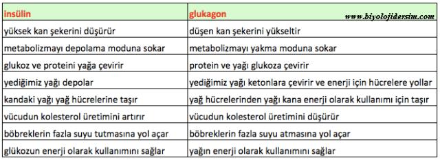 insülin ve glukagon görevleri
