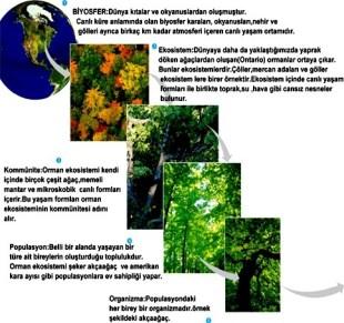 ekolojik organizasyon