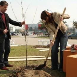 Primăria Braşov va planta în această primăvară 4.000 de puieţi şi peste 14 km de gard viu
