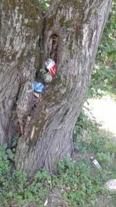 Gunoaie picnic Cheile Rasnoavei (1)