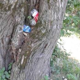 În Cheile Râșnoavei, în copaci au început să crească… gunoaie. Ce a găsit Garda de Mediu în urma unui control fulger