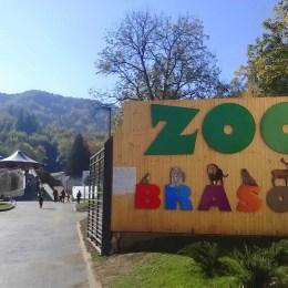 Zoo Braşov va avea 36 dintre cele mai veninoase specii de şerpi din lume